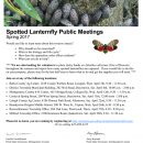 Spring 2017 Spotted Lanternfly Public Meetings Set